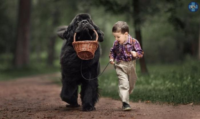 little-kids-big-dogs-2.jpg