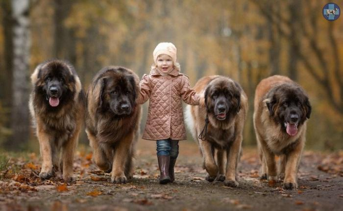 little-kids-big-dogs-18.jpg